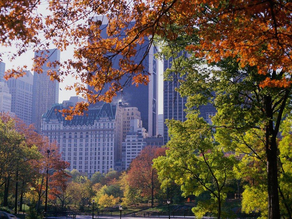 Central-Park-central-park-32583911-1024-768