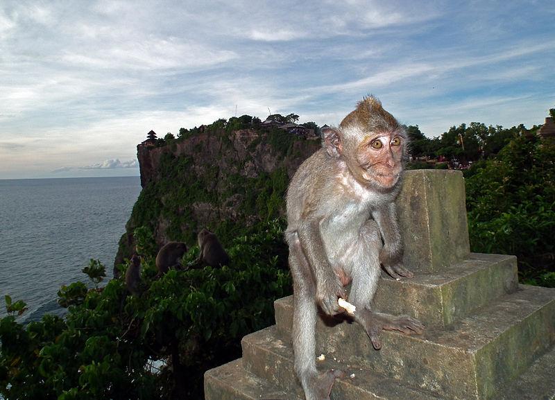 Maimuţe din zona Templului Pura Luhur Uluwatu