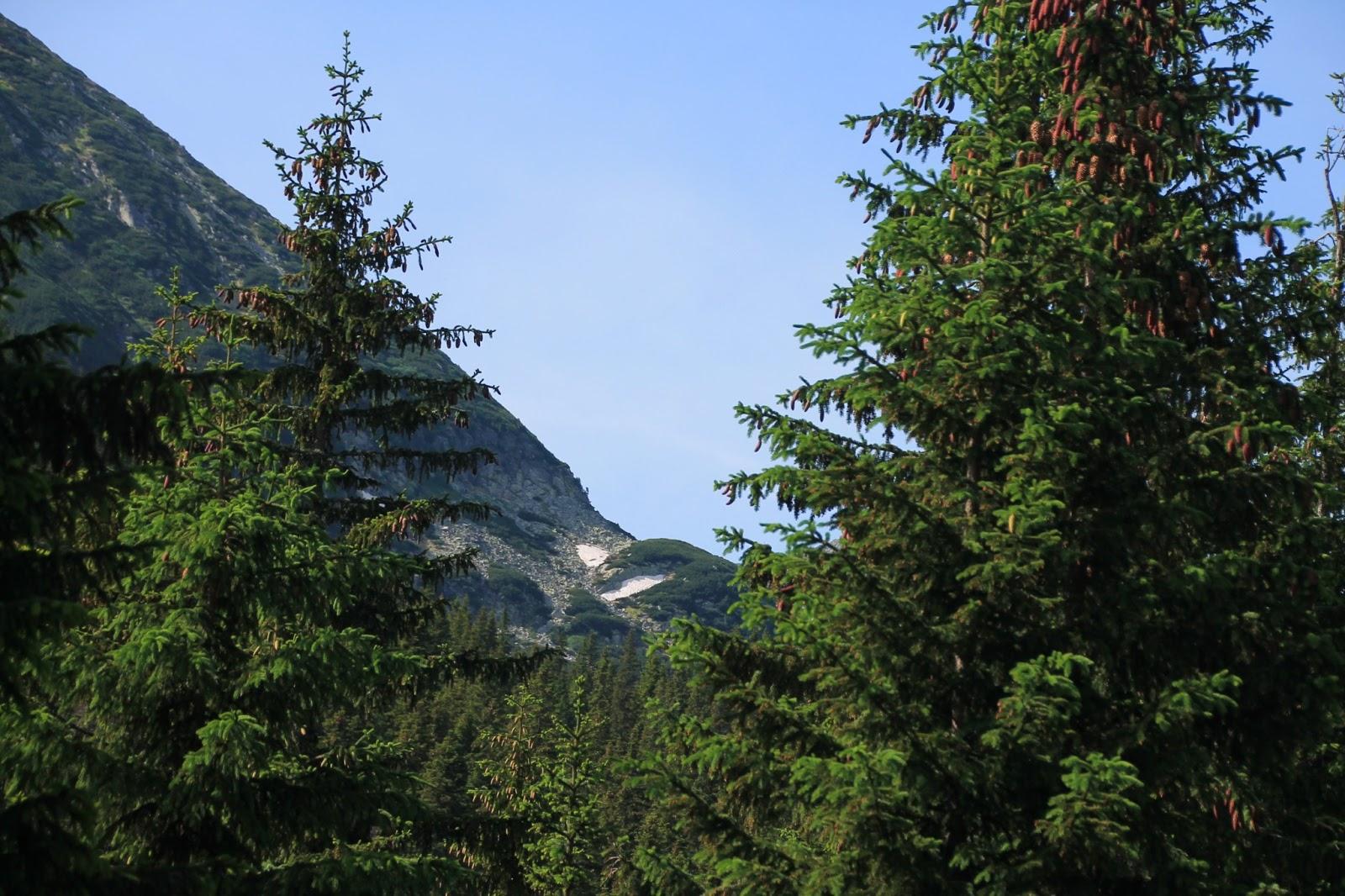 Parcul Național Retezat, printre conifere