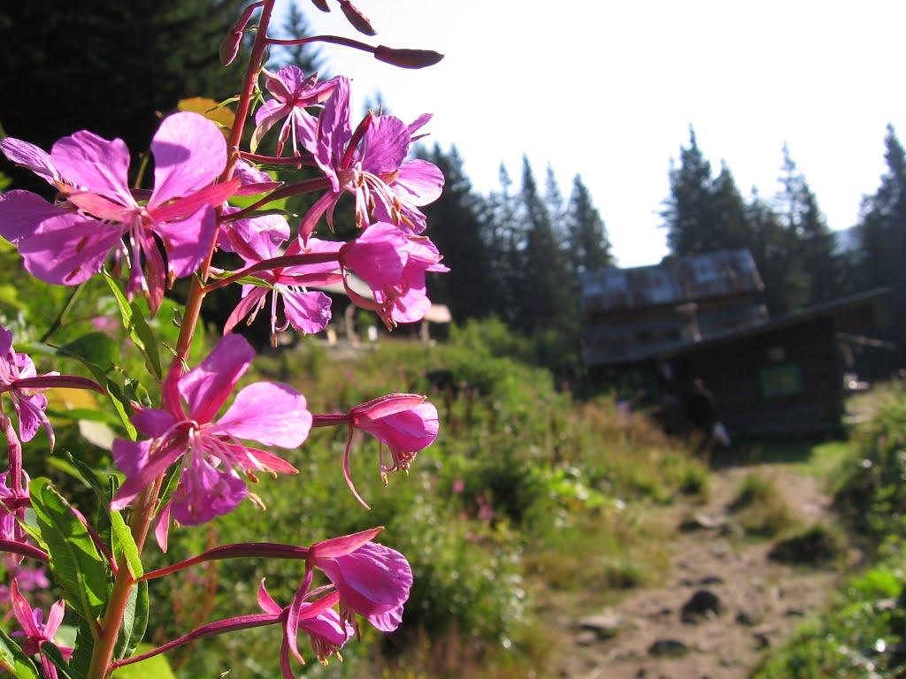 Parcul Național Retezat, frumusețea naturii
