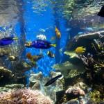 Waikiki Aquarium din Honolulu