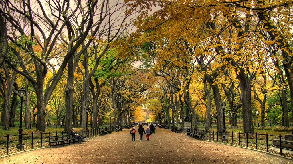 central-park-in-the-fall-its-fall---my-favorite-time-of-the-year-stephanie-frost-2k2shbbp