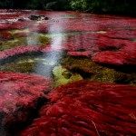 Râul Cano Cristales, Columbia