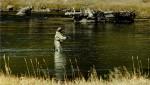 Apele lacurilor dn Parcul Yellowstone sunt o uriaşă sursă de peşte