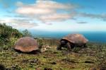 Broaştele Ţestoase Galapagos sunt un simbol al insulei