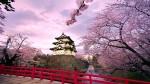 Celebrii cireşi înfloriţi, Kyoto, Japonia
