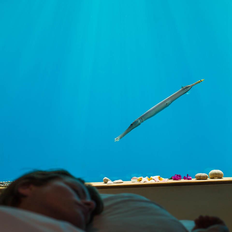 Dormind cu peștii la Hotelul Manta