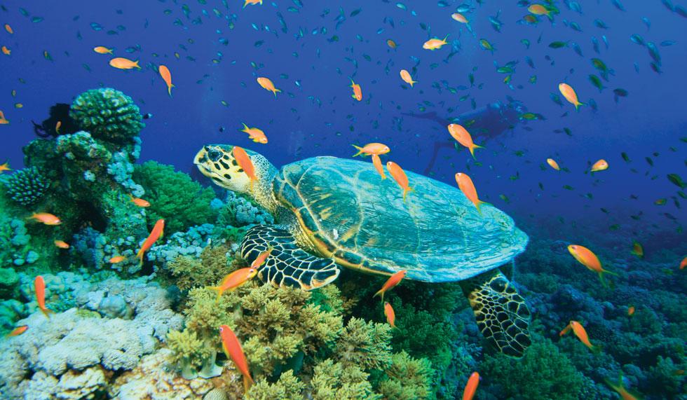 Fauna din adâncurile mării, Insula Sfânta Lucia