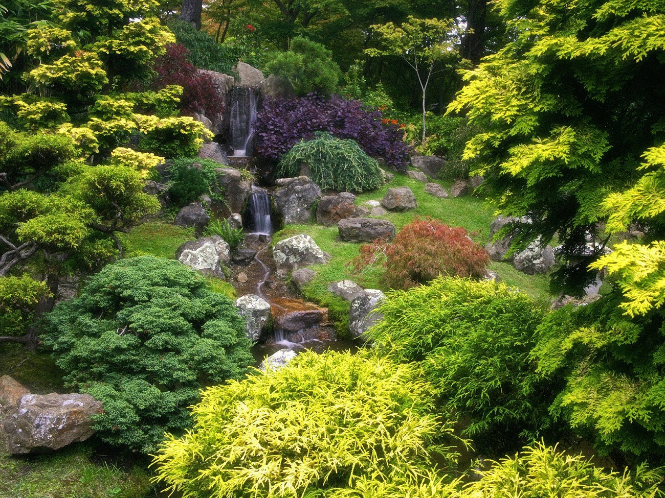 Grădina ceaiurilor japoneze, Parcul Golden Gate, San Francisco