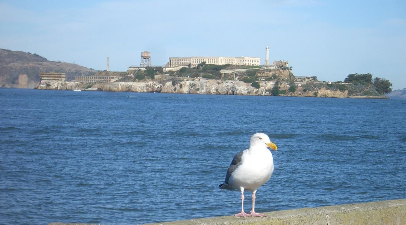 Insula Alcatraz şi un pescăruş, păsări specifice zonei