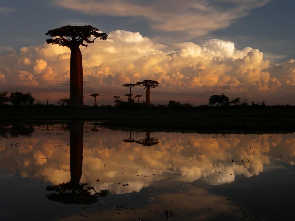 Insula Madagascar, baobabi care se oglindesc în lacul cu apă dulce din regiune