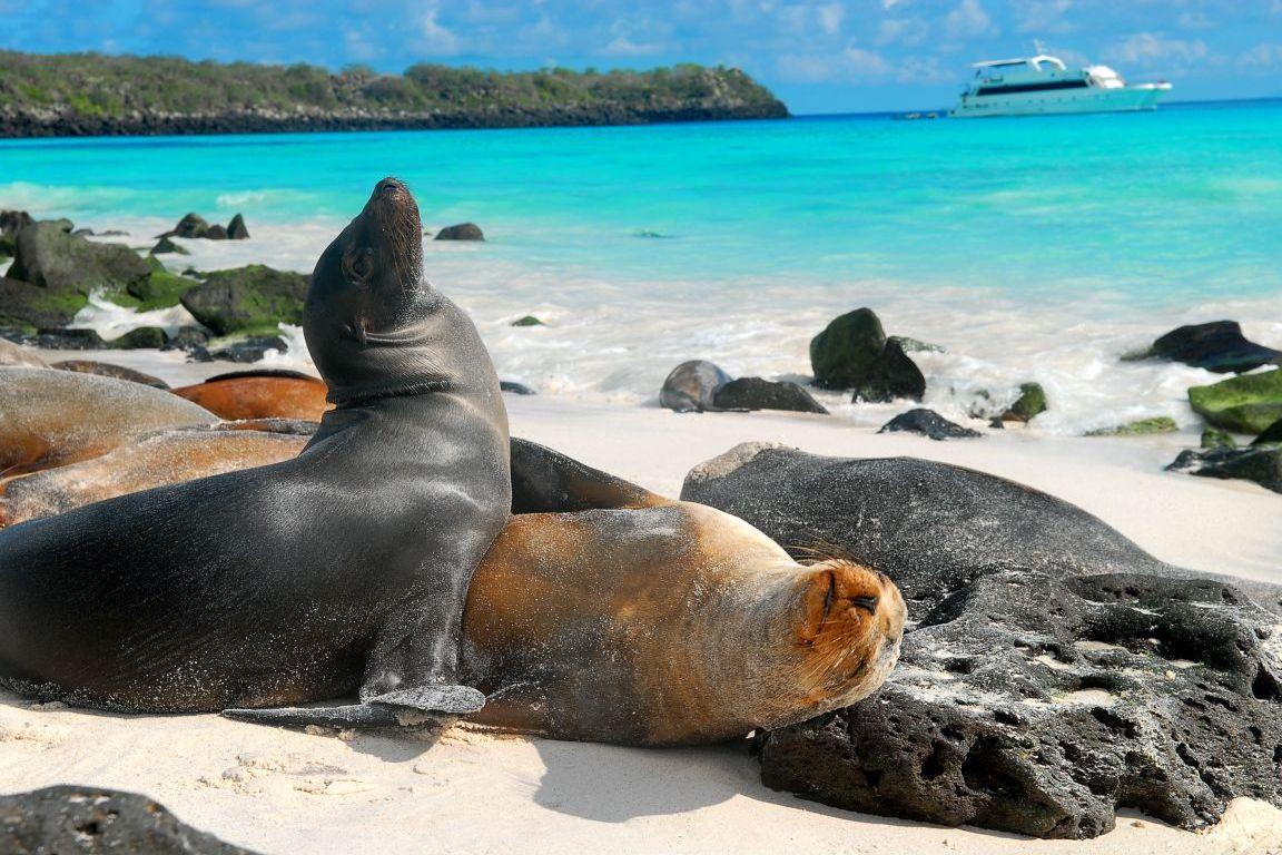 Leii de mare din Galapagos par a fi încântaţi de vizitele turiştilor