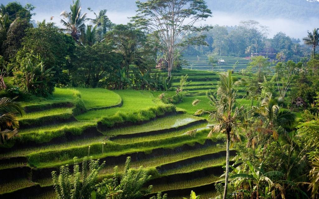 Natura luxurianta in Indonezia