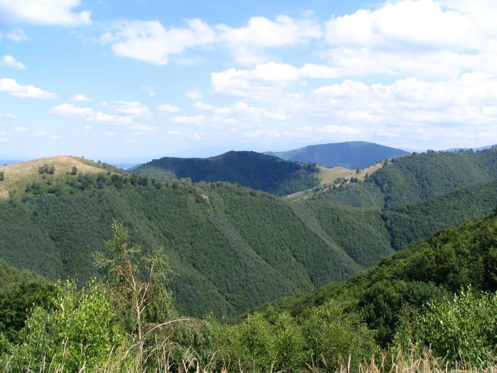 Natura salbatica in zona Păltiniș