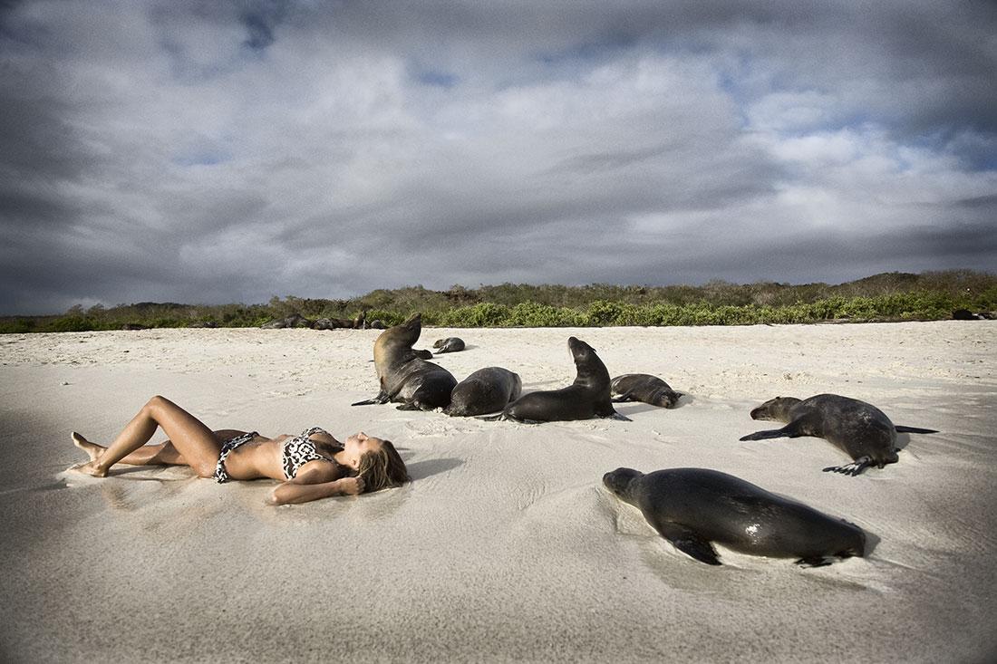 O sesiune de plajă lângă un grup de lei de mare pare a fi foarte relaxantă