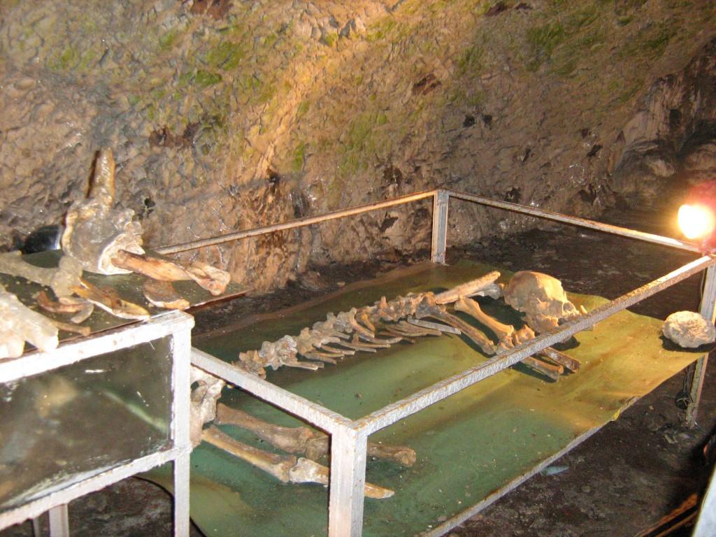 Osemintele unui Urs de Peșteră în Peștera Muierii