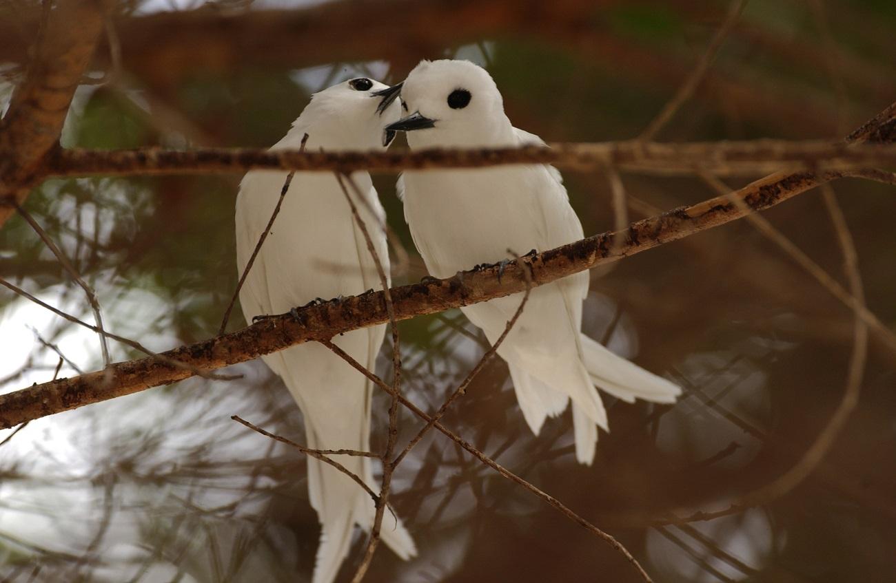 Păsări deosebite pe traseul de pe Muntele Gimie, Insula Sfânta Lucia