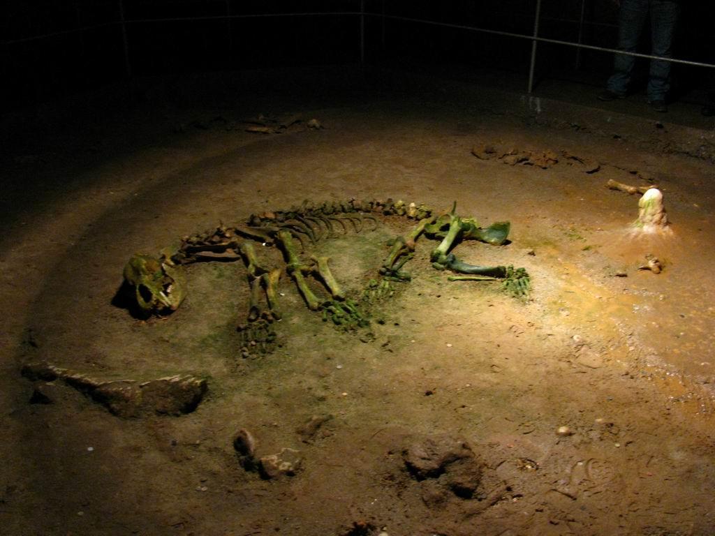 Peștera Urșilor, scheletul perfect conservat al unui urs