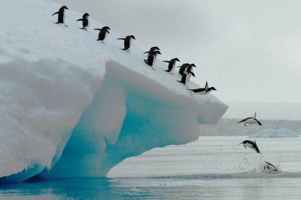 Pinguinii din Antarctica, una dintre cele mai mari atracţii ale regiunii