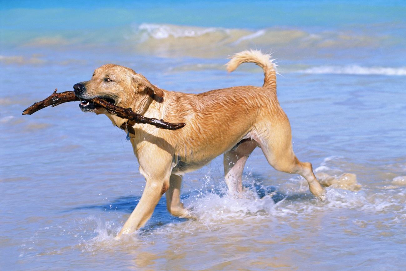 Plajă din San Diego unde este permis accesul câinilor