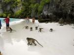 Plaja Maimuţelor din Ko Phi Phi