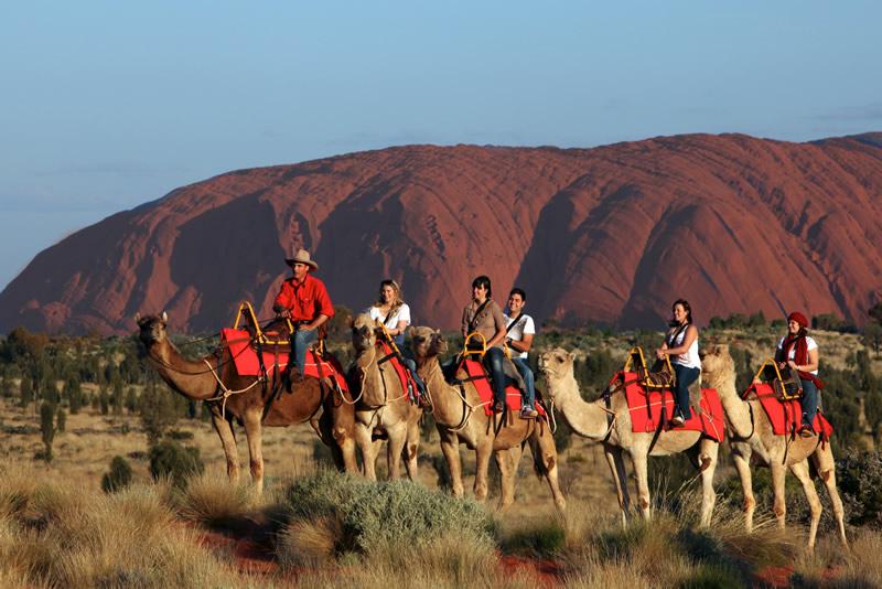 Plimbări pe cămile, Uluru, Australia