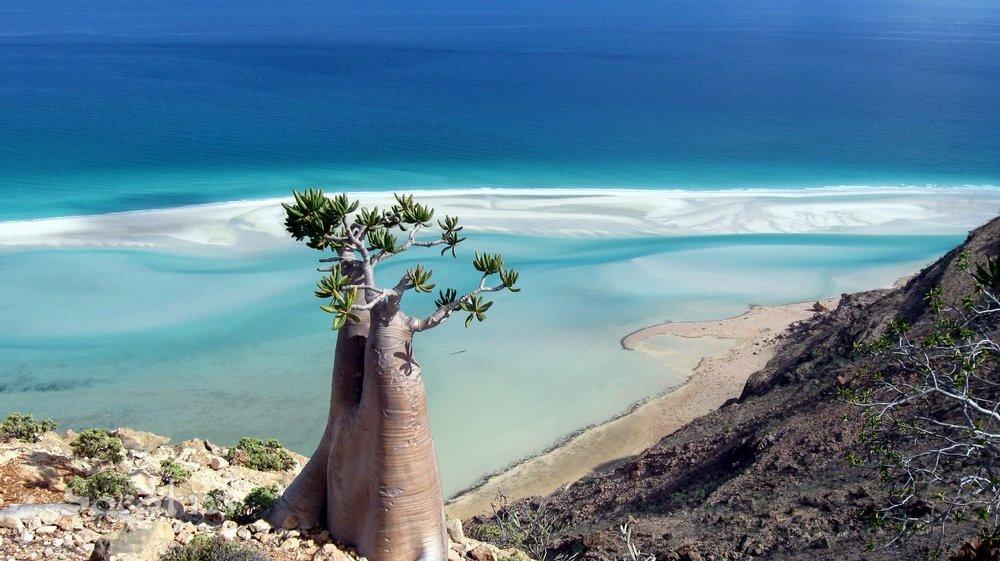 Privelişte din Insula Socotra şi un arbore specific zonei în prim plan