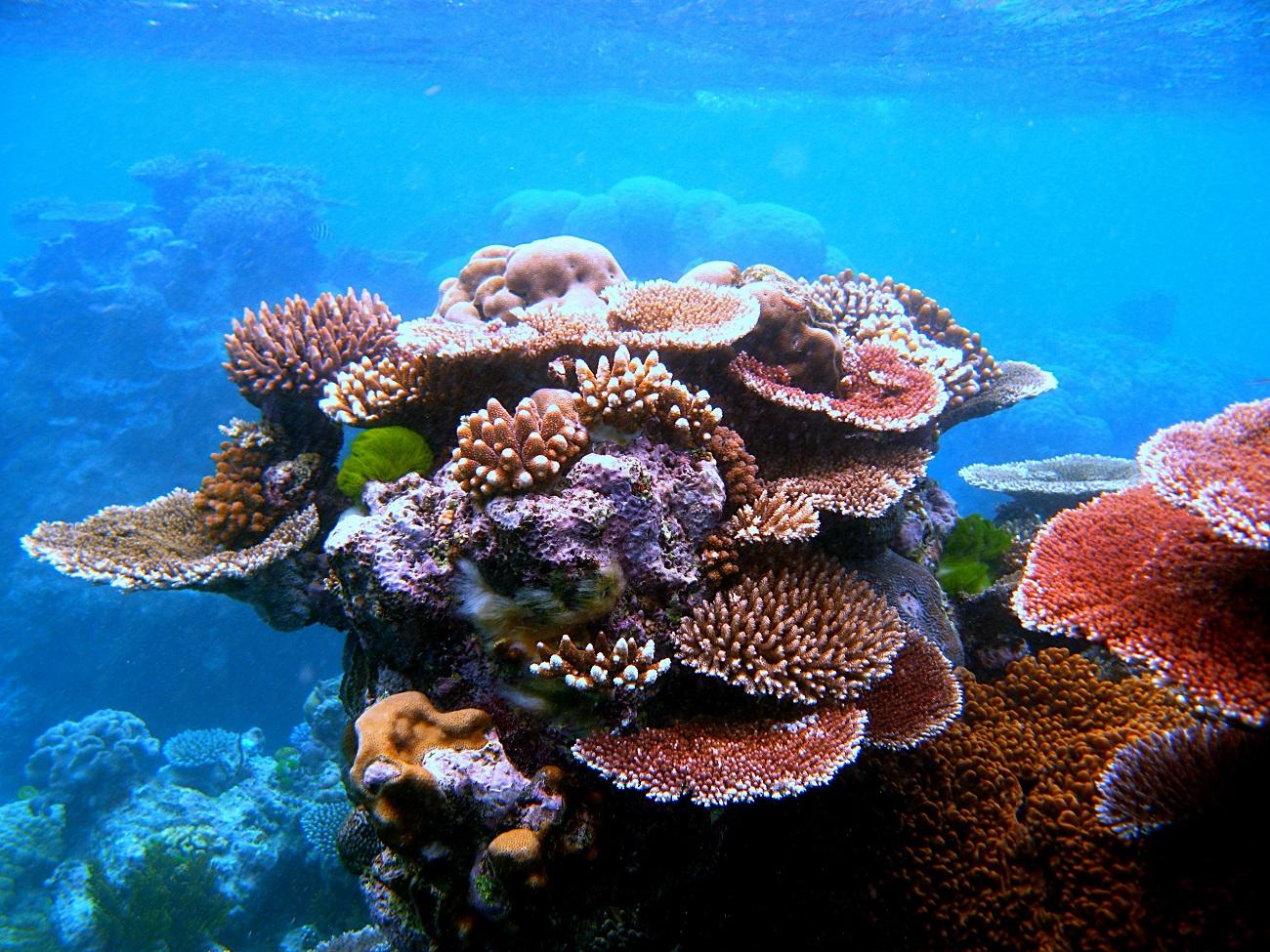 Recif de corali, Marea Barieră de Corali, Australia