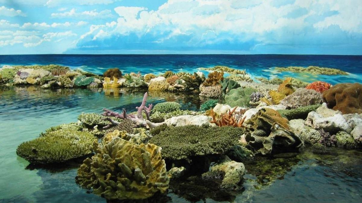Recife de Corali, Marea Barieră de Corali, Australia