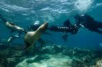 Scufundări cu prietenoşii lei de mare din Insulele Galapagos