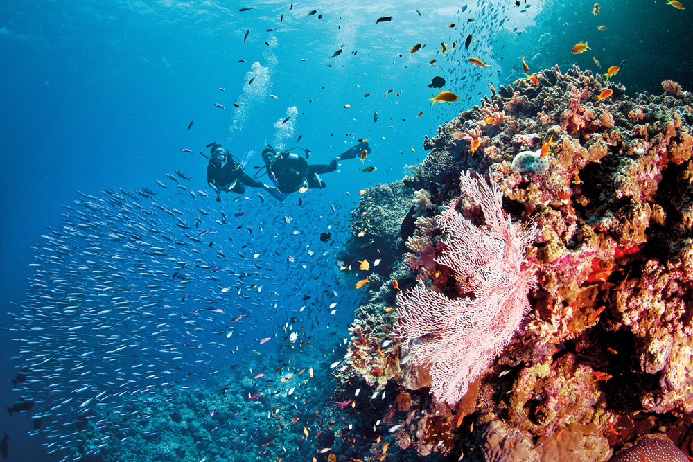 Scufundări la Marea Barieră de Corali, Australia