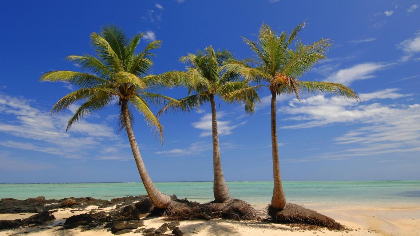 Specie rară de palmieri, Insula Madagascar