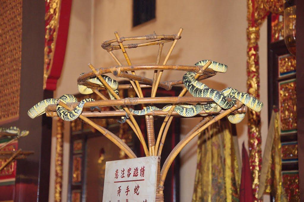 Șerpii stau liniștiți în templul ce le poartă numele