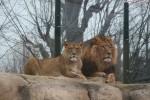 Leii în spatele paravanelor transparente