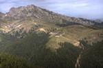 Munte și pădure