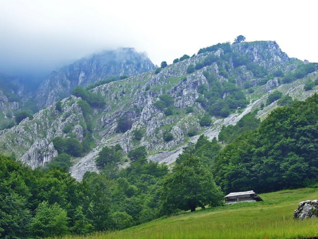 Natura pe Valea Cernei