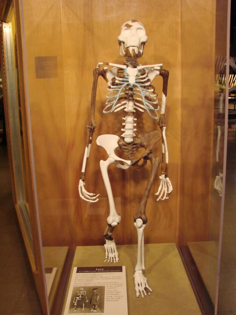 Nimic nu se compară cu un schelet preistoric