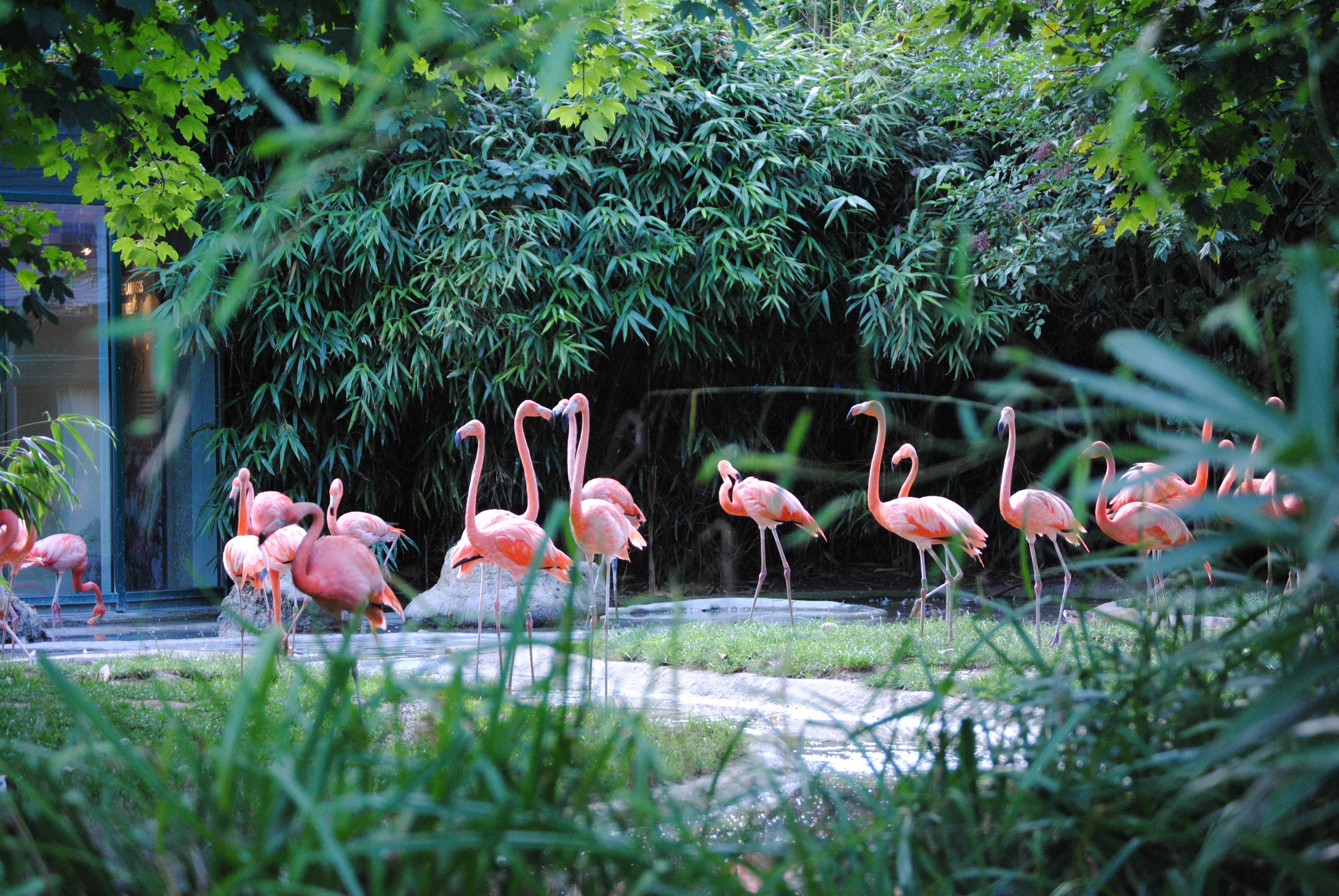 Păsări Flamingo...roz