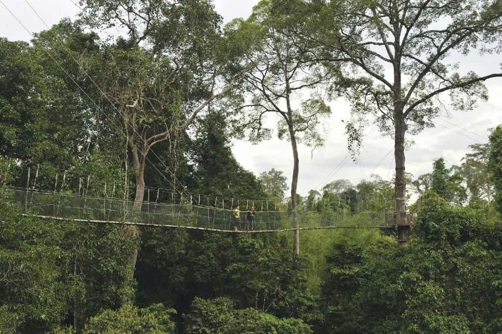 Platformă suspendată în Parcul Taman Negara