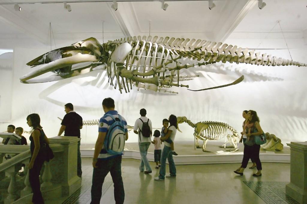 Schelete de animale marine la Muzeul Antipa