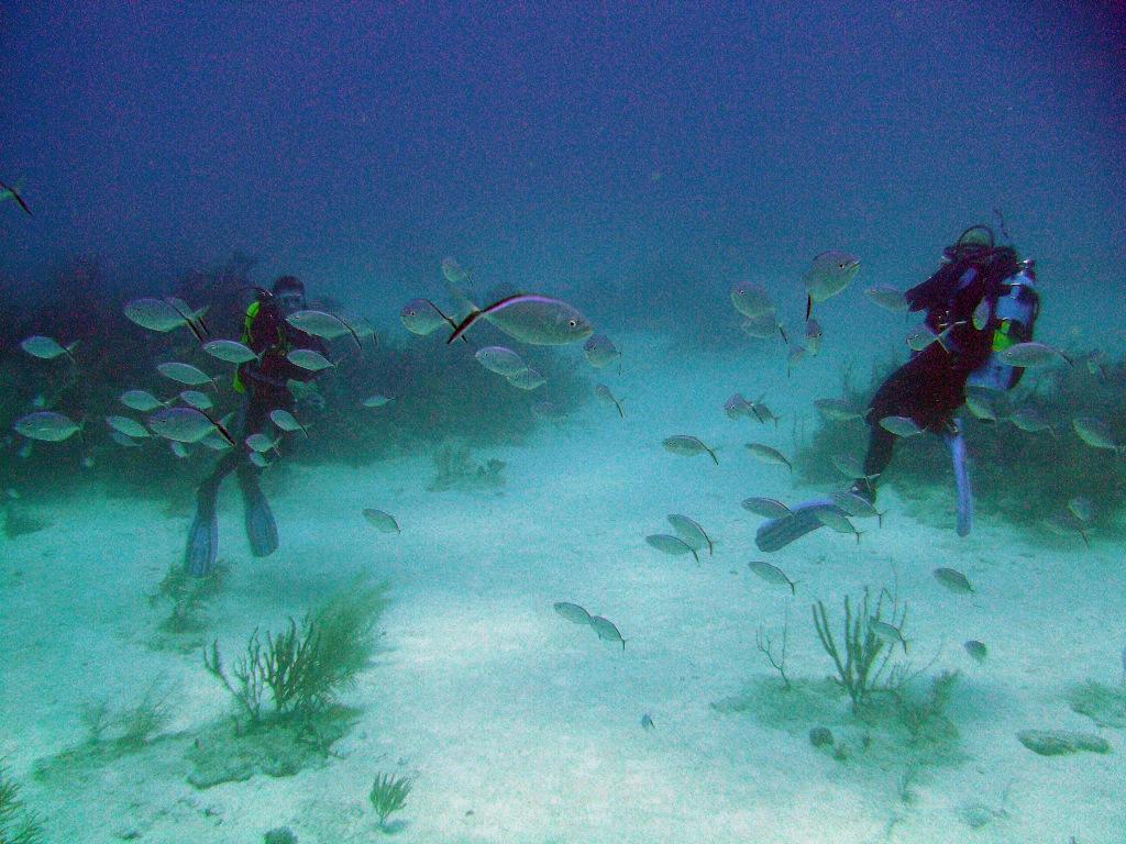 Scuba diving printre pești