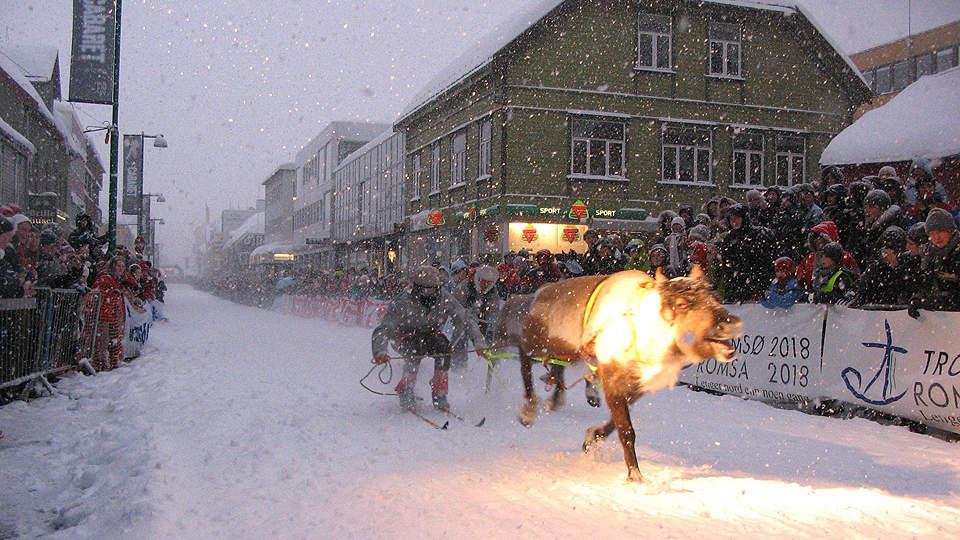 Tromso, aici renii sunt omniprezenți, singura întrebare este care sunt ai Moșului