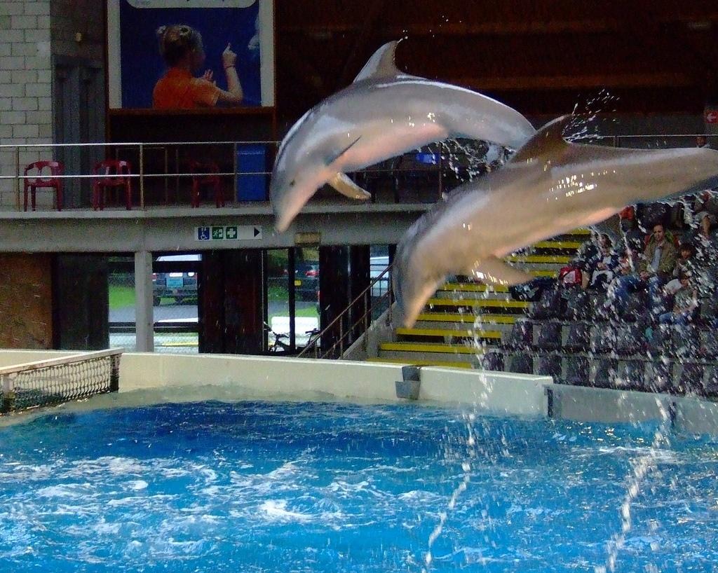 Spectacol cu delfini la Delfinariul din Bruges