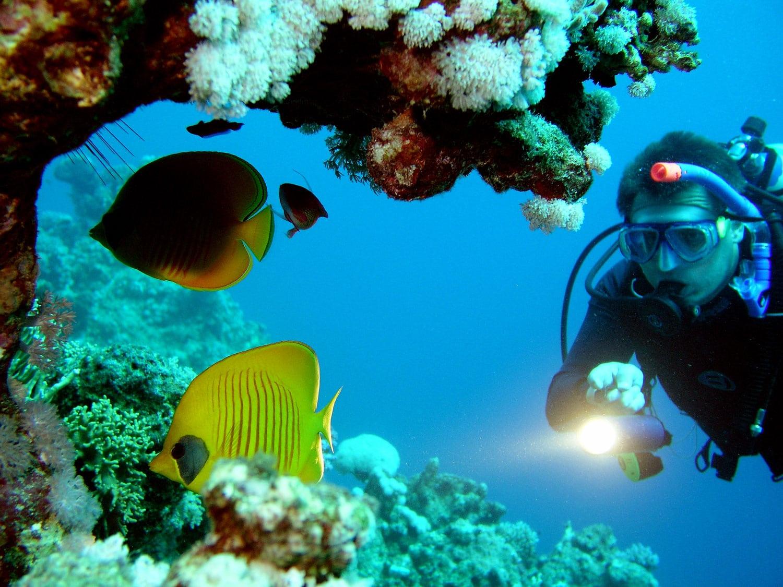 Adâncurile Oceanului Atlantic sunt alcătuite din comori nebănuite