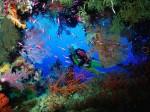 Adâncurile oceanului ascund o lume nouă