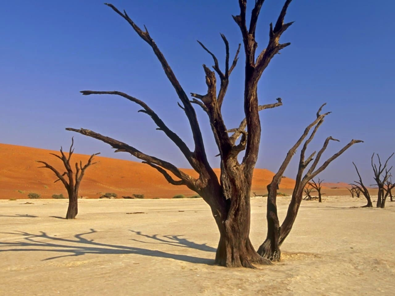 Arborii din Sossuvlei crează uimire în rândul vizitatorilor