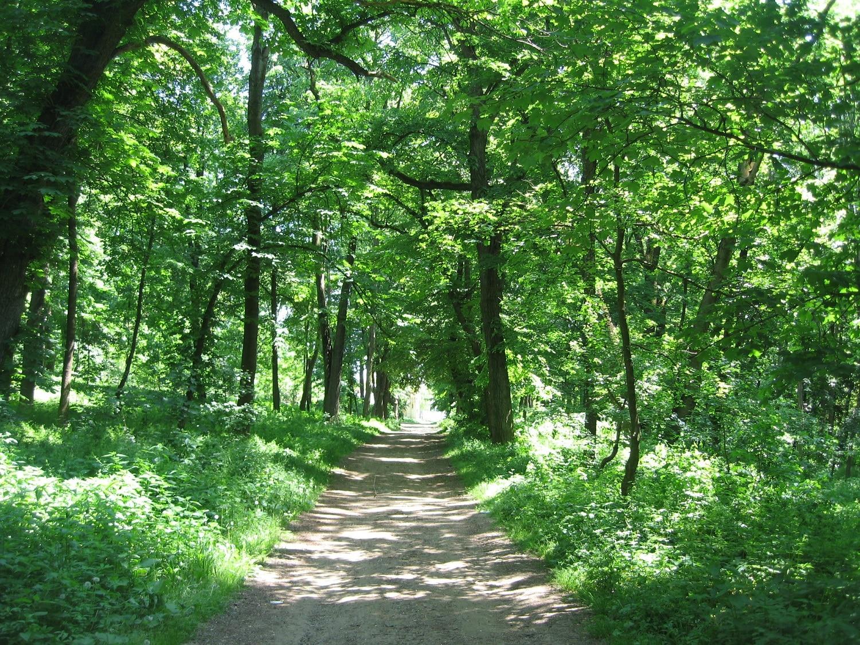 Cei care vor să ajungă la Castelul Sturdza trebuie să strabată un drum superb, prin pădure
