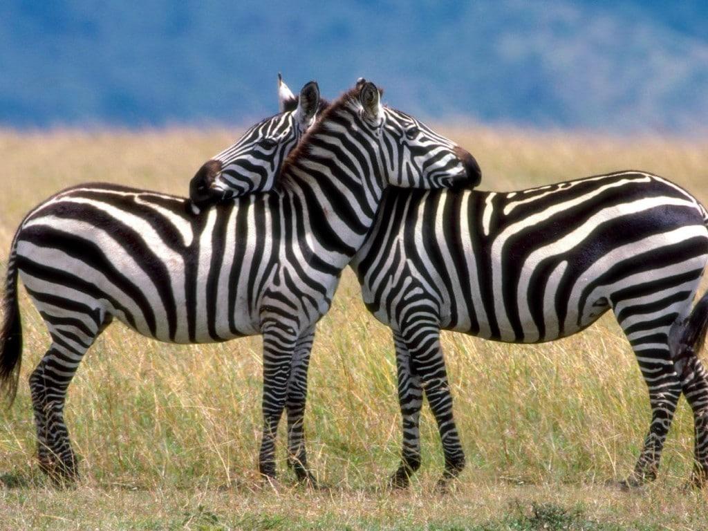 Cele mai impresionante momente pot fi surprinse în Serengeti