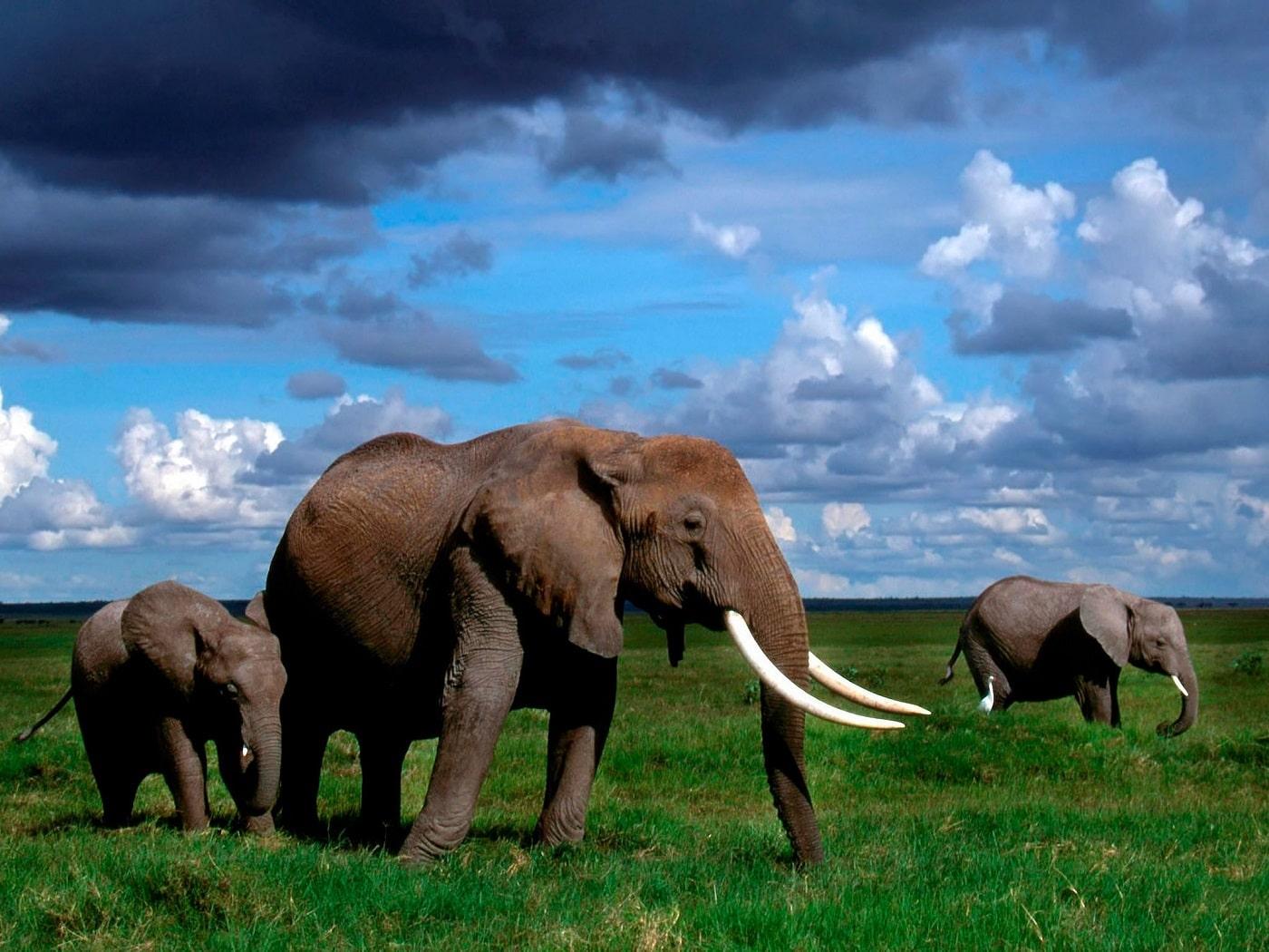 Cele mai uimitoare animale trăiesc în Serengeti