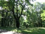 Parcul Castelului Sturdza de la Miclăușeni